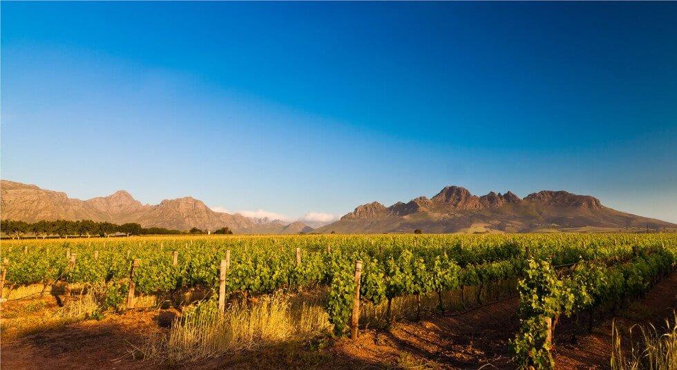 Journey's End Vineyards